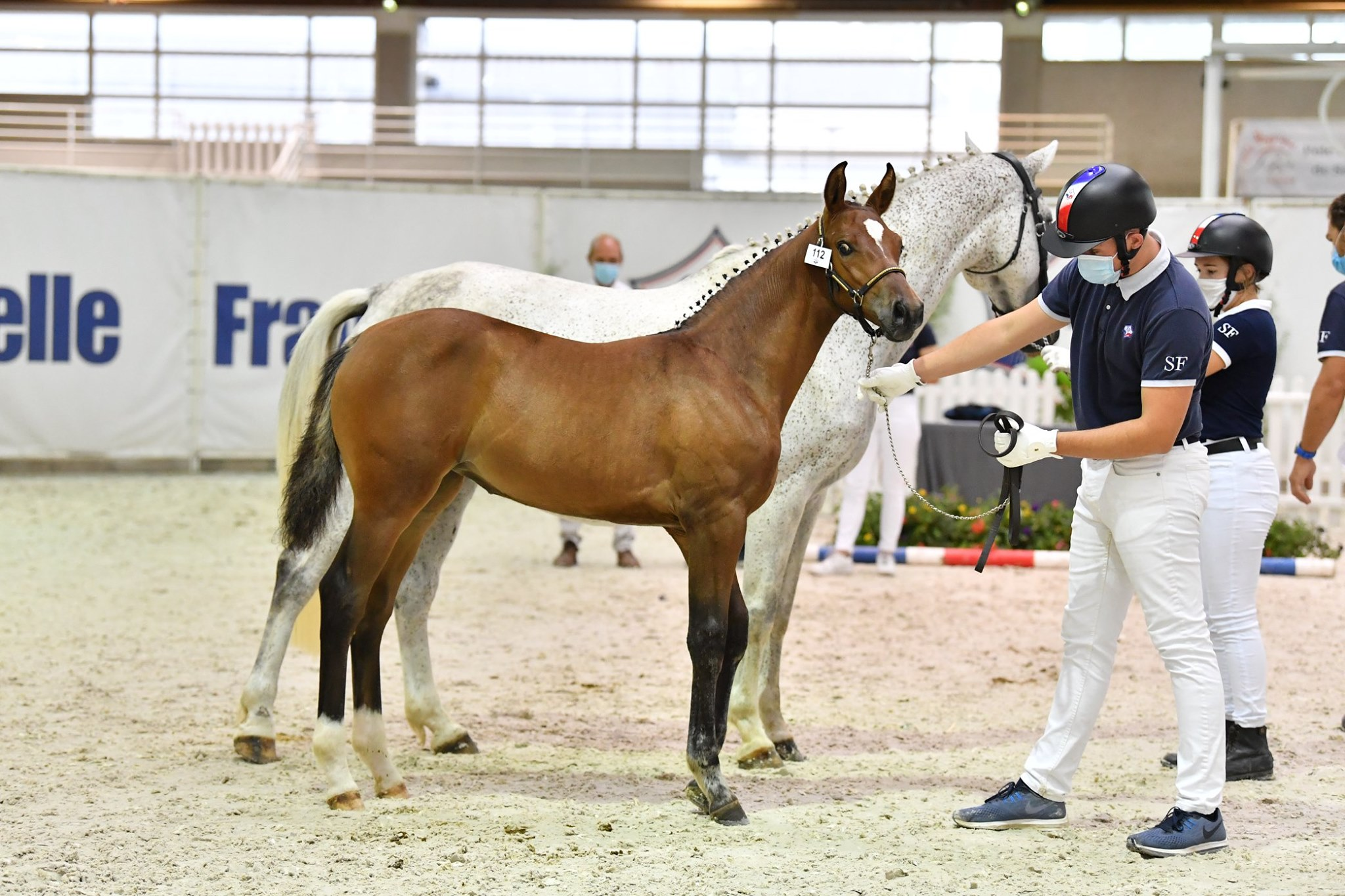 Un formidable palmares pour les foals de la région Céntre Val de Loire lors de la finale de St Lô