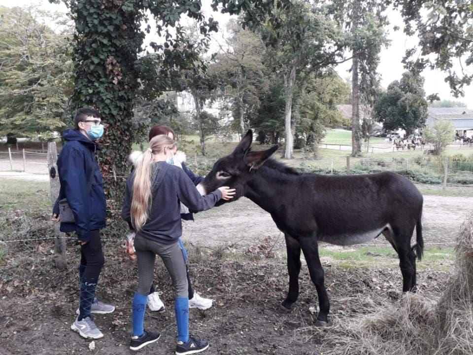Des ânes Grands Noirs du Berry au lycée de Saint Cyran du Jambot