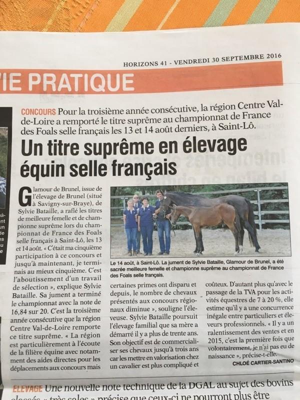Glamour de Brunel : foal SF champion suprême à St Lô