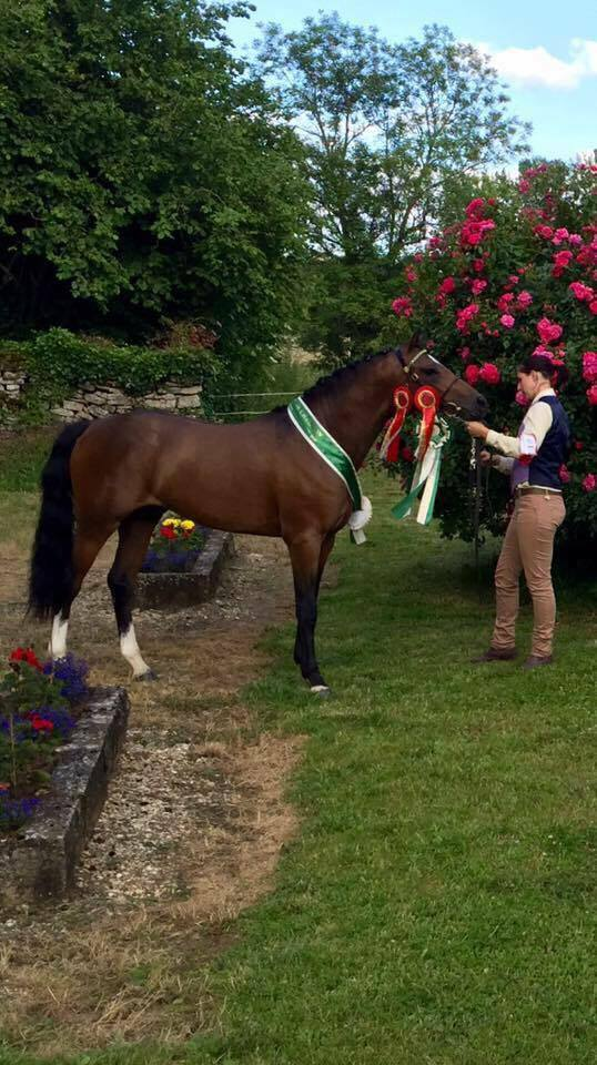 Deux poneys de l'élevage du Granit  dans le GREEN JOURNAL, la bible du poney Welsh !