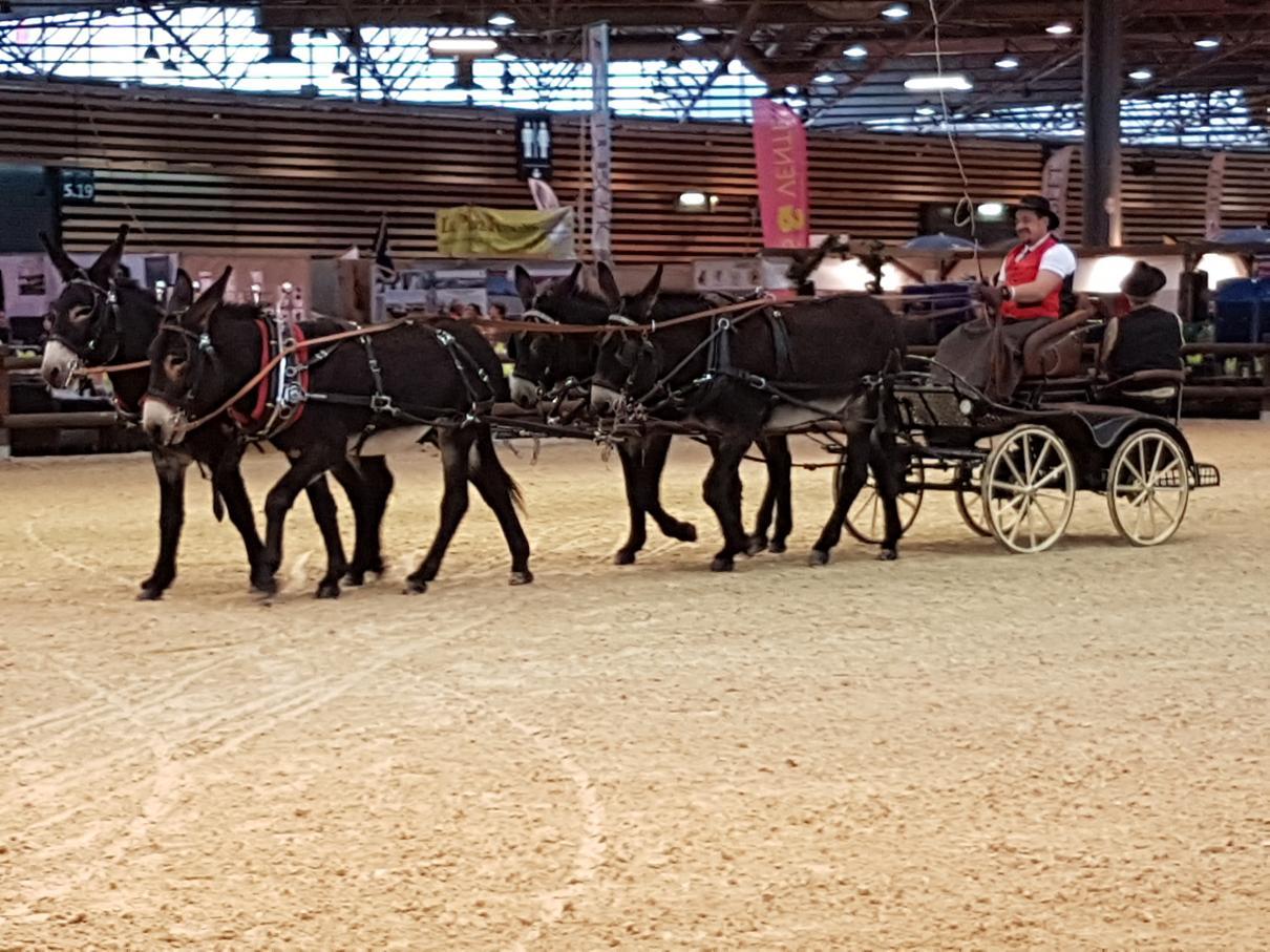 L'âne Grand Noir du Berry, les Equitraits et le concours de jugement des jeunes au Salon international de l'agriculture de Paris du 25 février au 4 mars