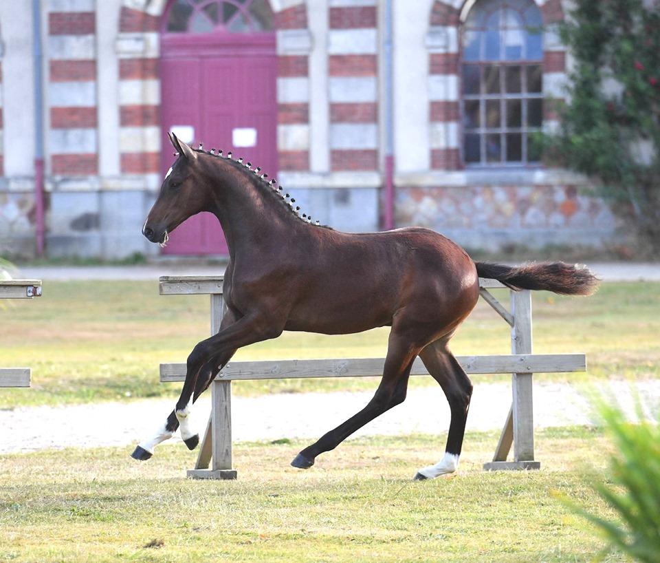 Encore un champion pour la région Centre Val de Loire à la finale foals de St Lô