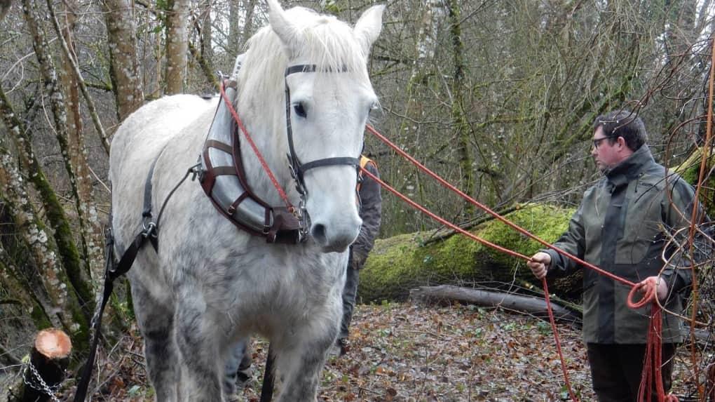 Débardage à cheval sur les bords de l'Indrois