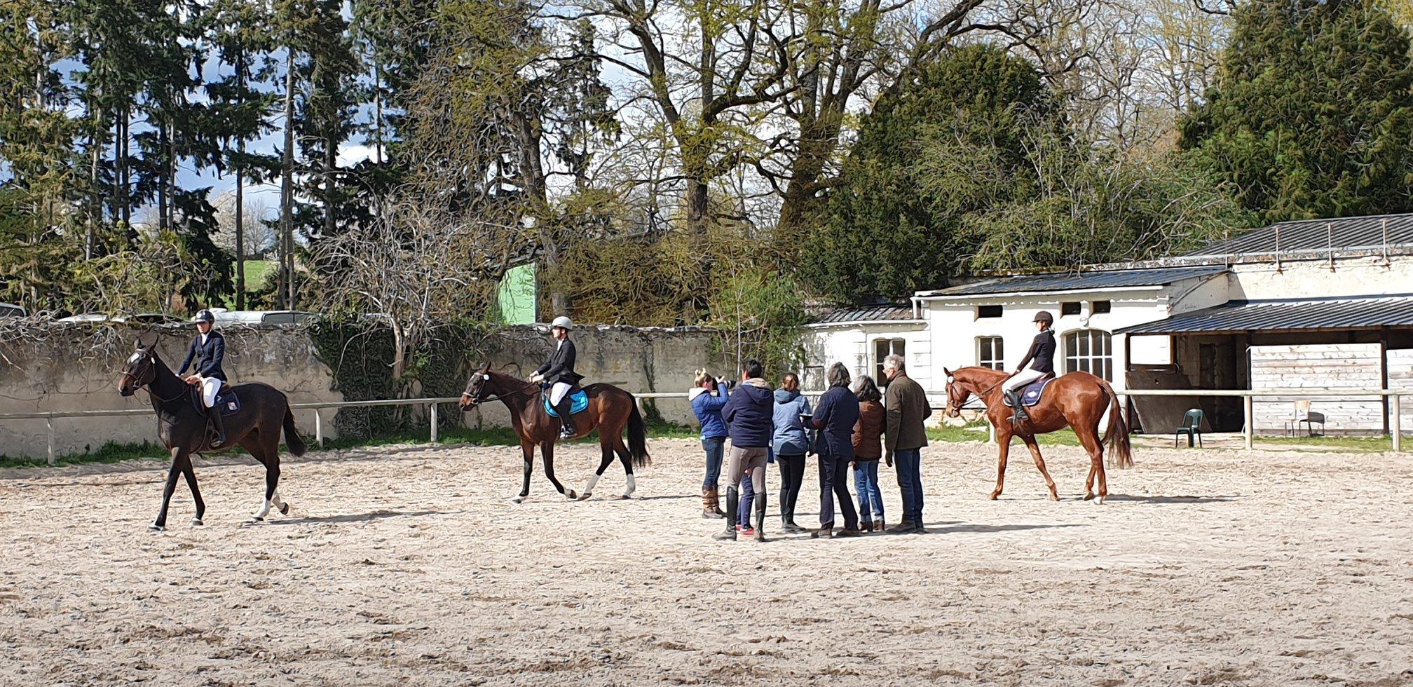 Concours Modèle et Allures jeunes chevaux de 2 et 3 ans à Saint Cyran du Jambot