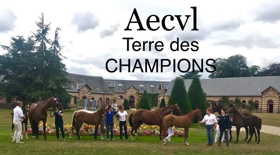 Concours National Foals de Saint Lô : de l'excellence de l'élevage en Centre Val de Loire