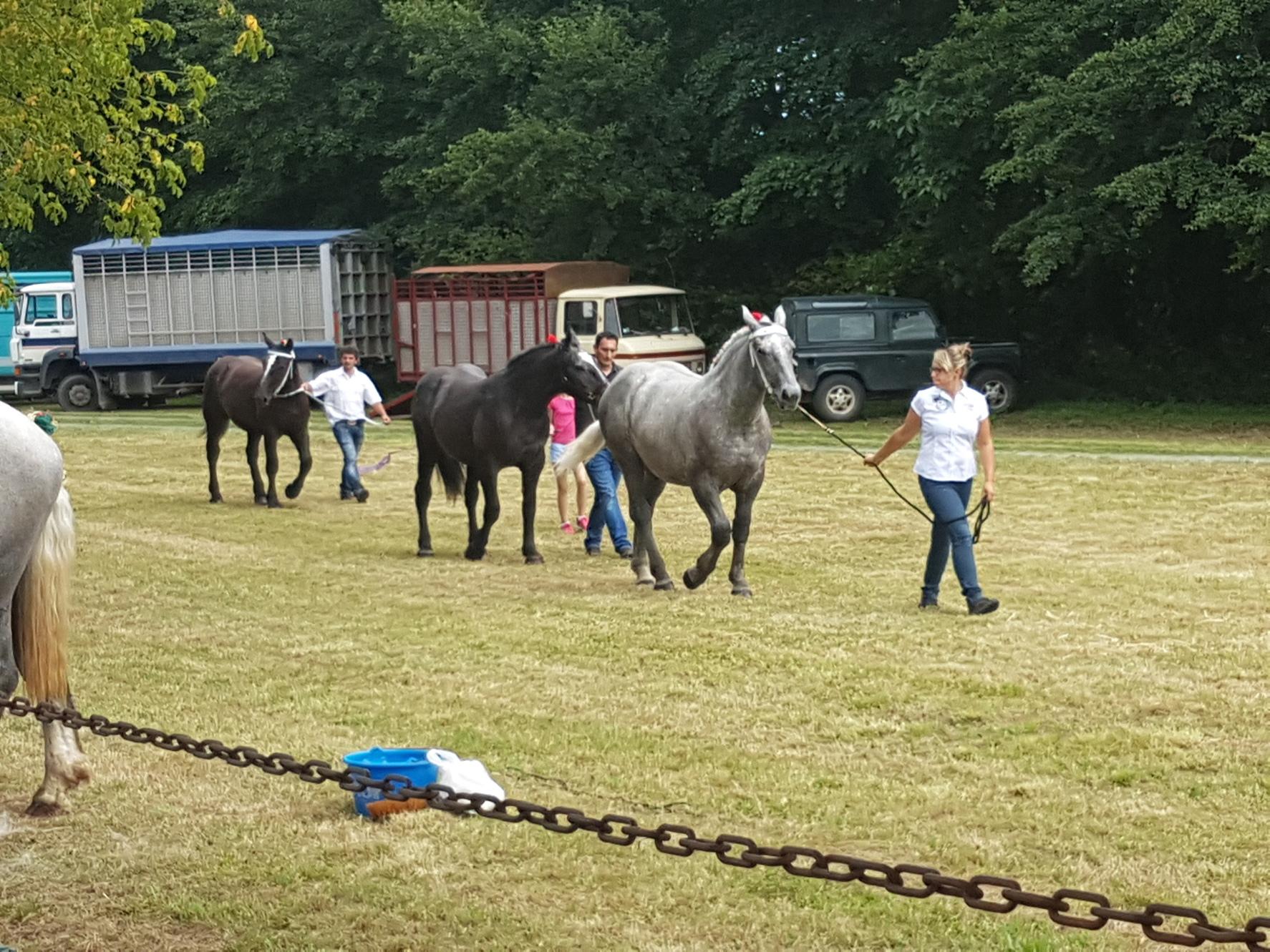 Consours Modèle et allures chevaux de trait à la Berthenoux