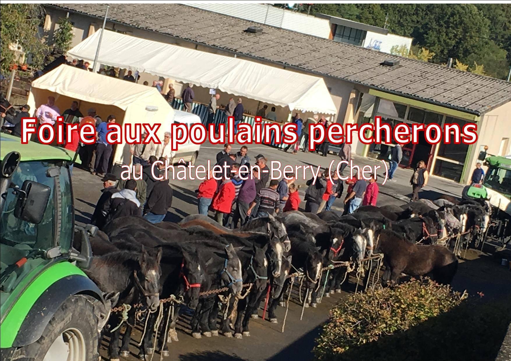 Foire au poulains Percherons au Chatelet (18)