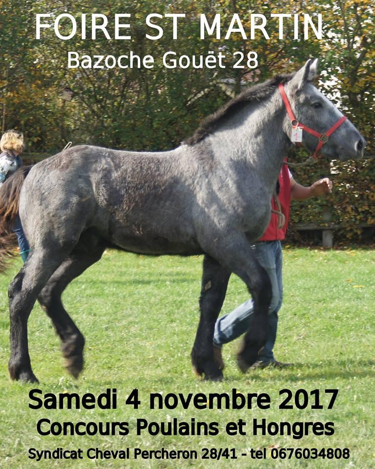 Concours poulains et hongres Percherons à Bazoches Gouet (28)