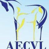 Calendrier des concours modèle et allures AECVL